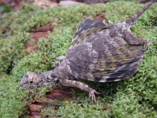 Lizard-533x400