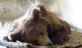 Nutu Camataru ar plange daca ar vedea aceste imagini! Ursul interlopului a fost operat azi