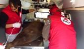 Operatie Baloo_VIER PFOTEN (5)