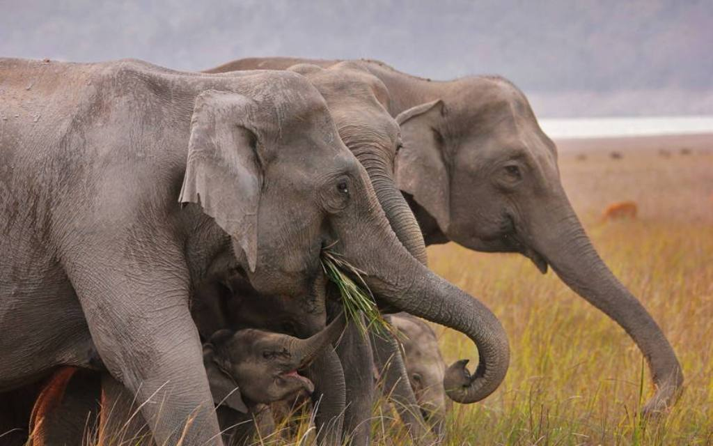 Picture-mother-baby-elephant-16