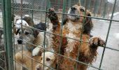ASPA: În 2016 au fost capturați 4.000 de câini; 2.000 au fost adoptați, iar 1.000 eutanasiați