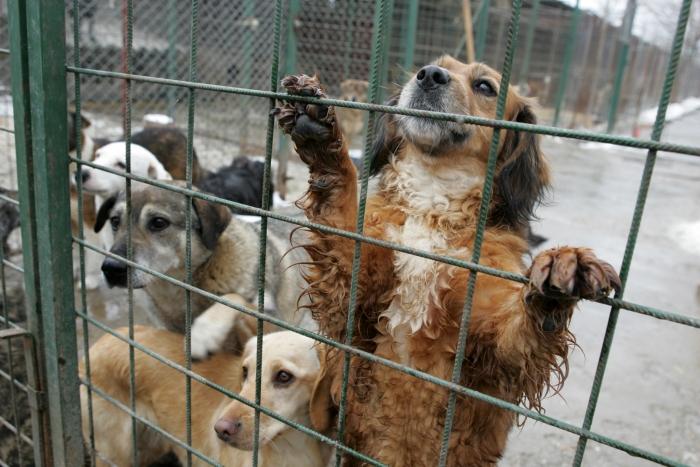 Șocant! Câinii de la Călărași au fost împușcați pentru că speriau vânatul