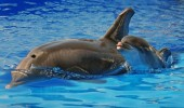 Dolphin Dottie Gives Birth At SeaWorld In San Diego