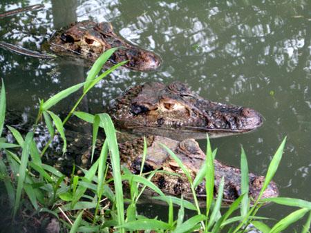 Grădina Zoologică din Sibiu acuzată că a cumpărat ilegal doi crocodili