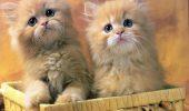 Concurs pentru pisicute! Trimite-ne povestea ta!