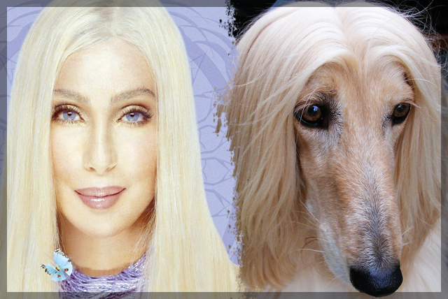 People Who Look Like Their Pets