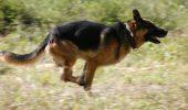 O femeie a fost salvată de la sinucidere de câinele ei