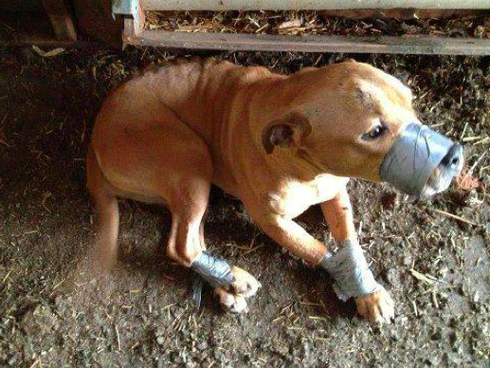 duct-taped-dog