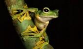 flying-frog-560x392