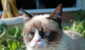 grumpy-cat-photos-01-480w