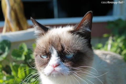 grumpy-cat-photos-01-480w
