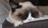 grumpy-cat-photos-010-480w