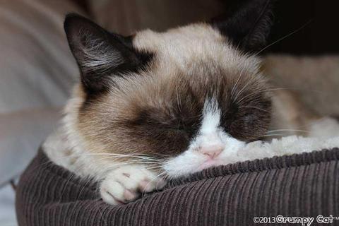 grumpy-cat-photos-010-480w