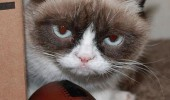 grumpy-cat-photos-011-480w