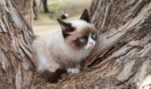 grumpy-cat-photos-012-480w