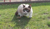grumpy-cat-photos-013-480w