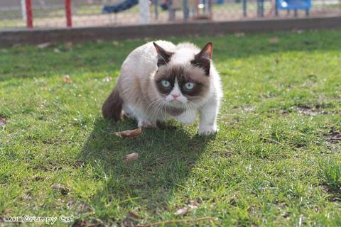 grumpy-cat-photos-013-480w