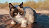 grumpy-cat-photos-014-480w