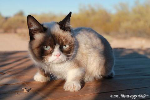 grumpy-cat-photos-014-480w