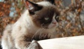 grumpy-cat-photos-015-480w