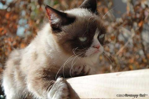 grumpy-cat-photos-015-480w