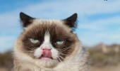 grumpy-cat-photos-016-480w