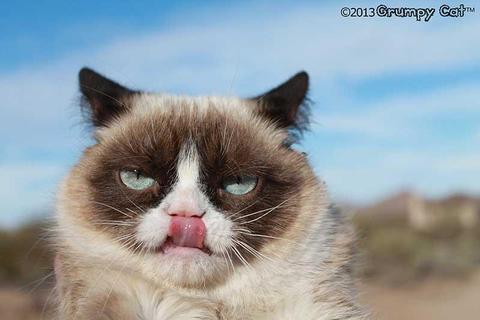 grumpy-cat-photos-016-480w