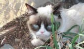grumpy-cat-photos-02-480w