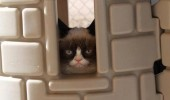 grumpy-cat-photos-03-480w