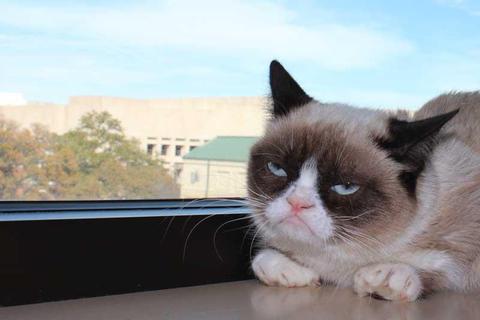 grumpy-cat-photos-05-480w