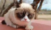 grumpy-cat-photos-06-480w
