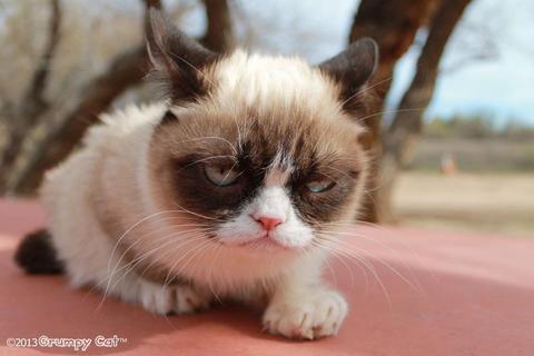 grumpy-cat-photos-06-480w