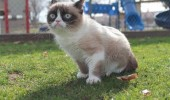grumpy-cat-photos-07-480w