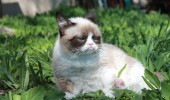 grumpy-cat-photos-08-480w