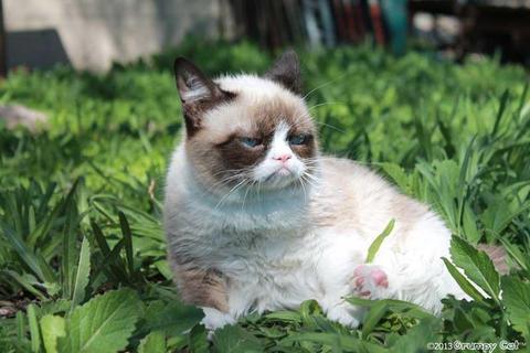 grumpy-cat-photos-08-480w