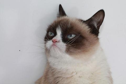 grumpy-cat-photos-09-480w