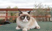 """Află dacă Grumpy Cat e femelă sau mascul, care este numele real și de ce e atât de """"SUPARICI""""!"""