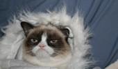 grumpy very grumpy