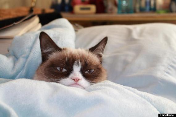 Intrebarea zilei: Care sunt jucariile preferate a le lui Grumpy Cat? VIDEO