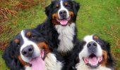 Ne vedem la ora 14.00 în Parcul Herăstrău!!! – Lecții de dresaj gratuite – Cadouri din partea ANIMAX – Expoziție canină – DISTRACȚIE PE CINSTE!