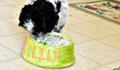 homemade-healthy-dog-food-recipe-lily