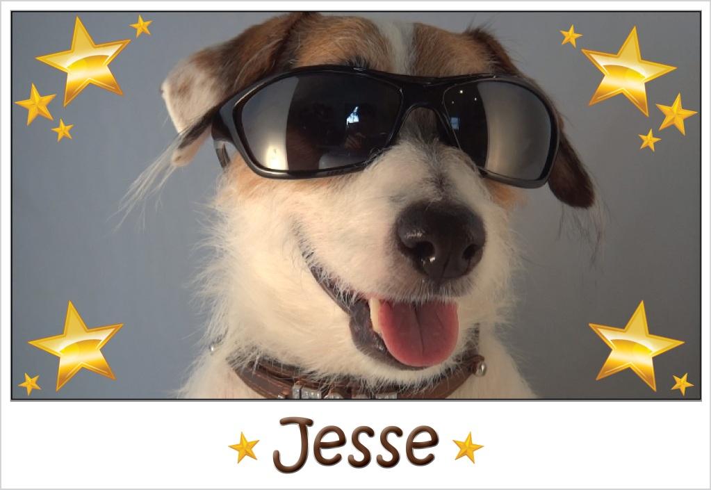 Acesta este probabil cel mai inteligent câine din lume! O să rămâi cu gura căscată!