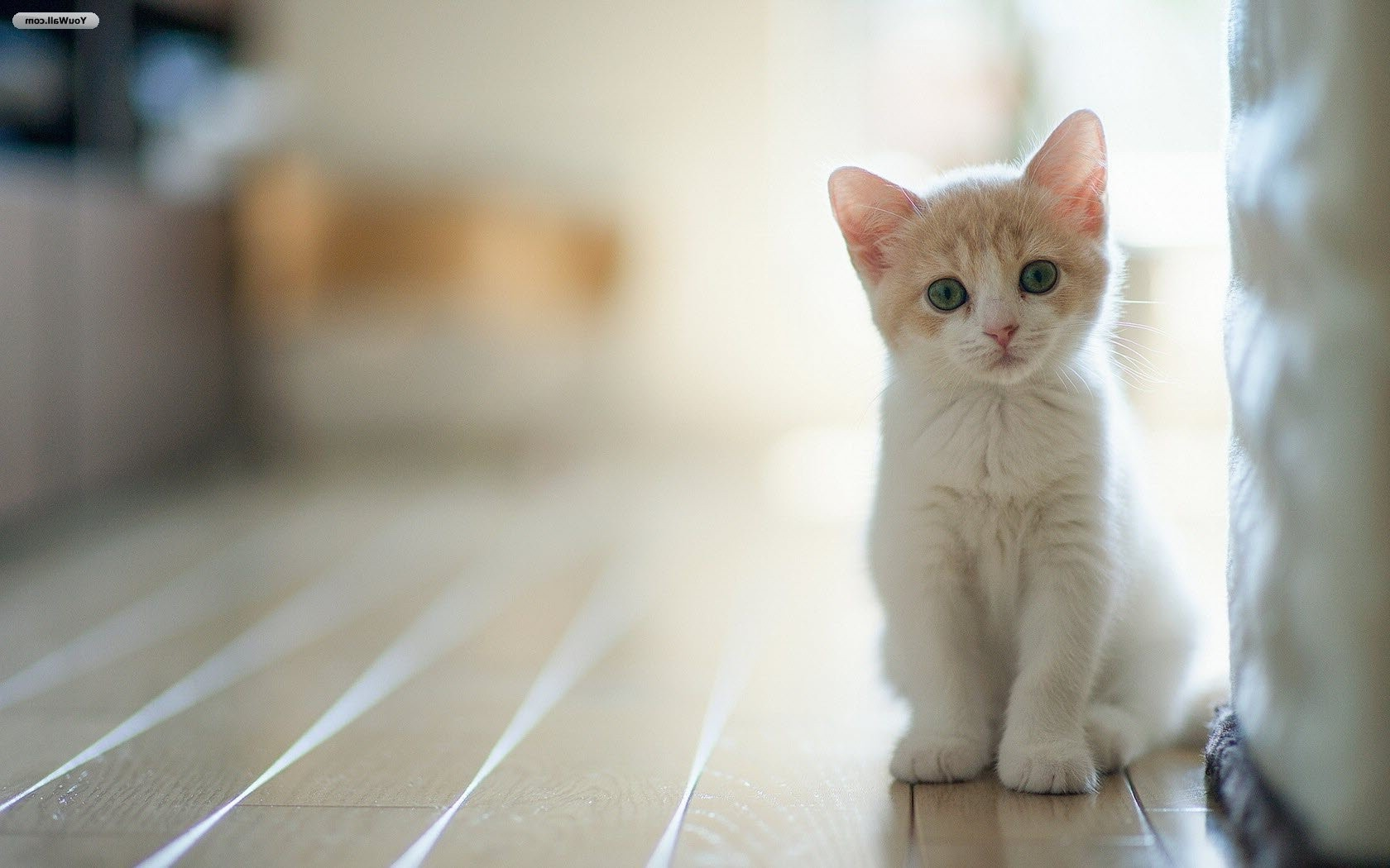 Comportamentul nocturn al pisicii | Rezolvari si raspunsuri