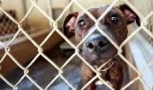 Gata cu călăii! Doar câinii bolnavi incurabil vor putea fi eutanasiaţi