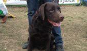 Patru expoziții de câini în weekend