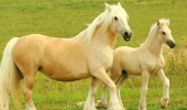 mother-daughter-horses-226891