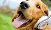 Exista o melodie care calmeaza animalele si le trimite la culcare! Da PLAY si vezi efectele