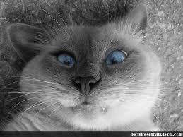 Credeai că pisica ta e rea? Uite-le pe mâțele astea ce fac | O sa lesini de râs!!!
