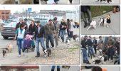 Plimbare protest la Timisoara! Oamenii nu vor taxa pe animal de companie