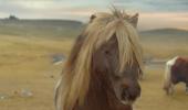 Acest ponei te va face sa dansezi! Uite cat de bine executa miscarile lui Michael Jackson!